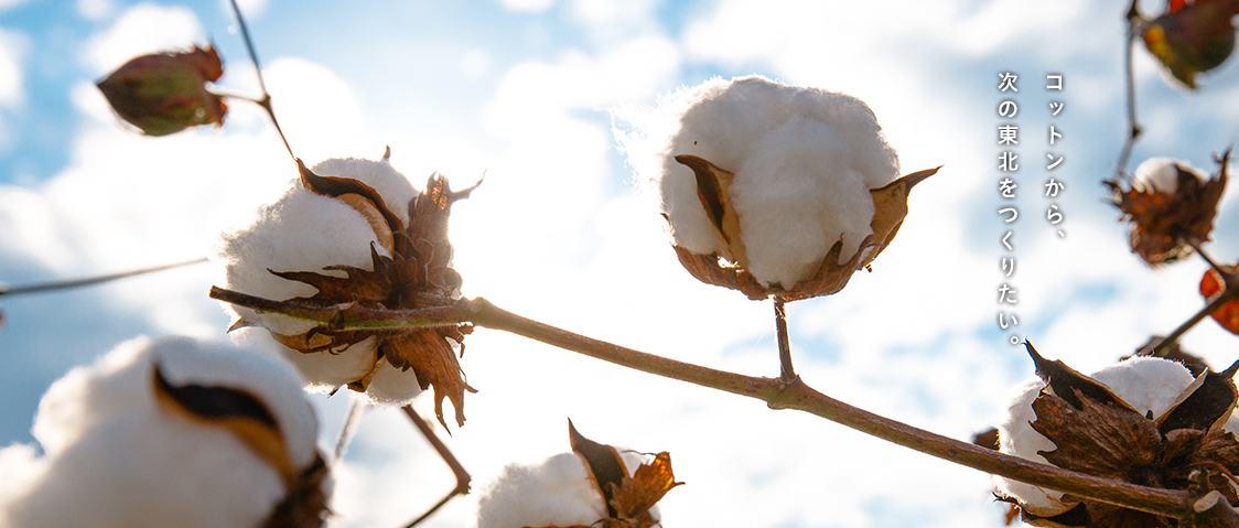 with cotton we are building the Tohoku of tomorrow